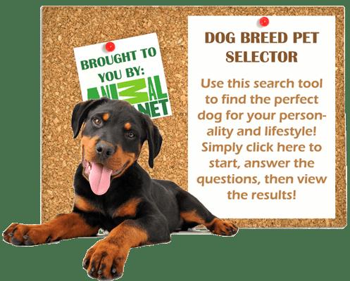 dog-breed-pet-selector